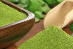 Moringa oleifera contains over 90 different nutrients c urlytea.com
