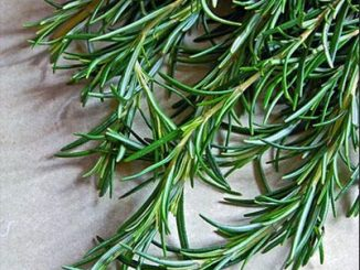 red rosemary horsetail and green tea conditioner - curlytea.com