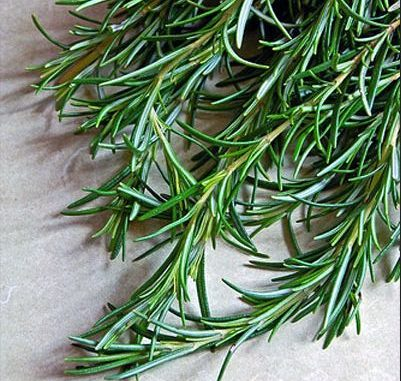 rosemary horsetail and green tea conditioner
